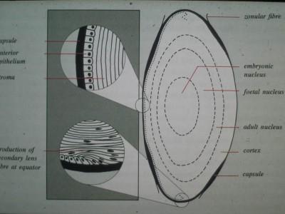 anatomi10