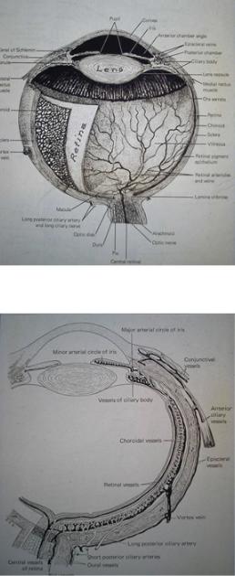 anatomi11