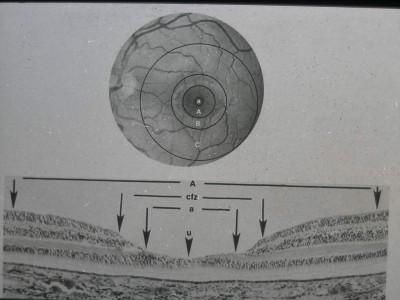 anatomi14