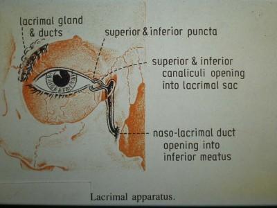 anatomi5